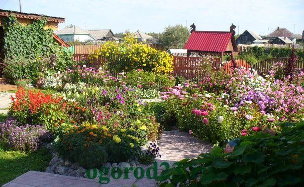 Однолетние цветы, цветущие все лето без рассады - название и фото цветника