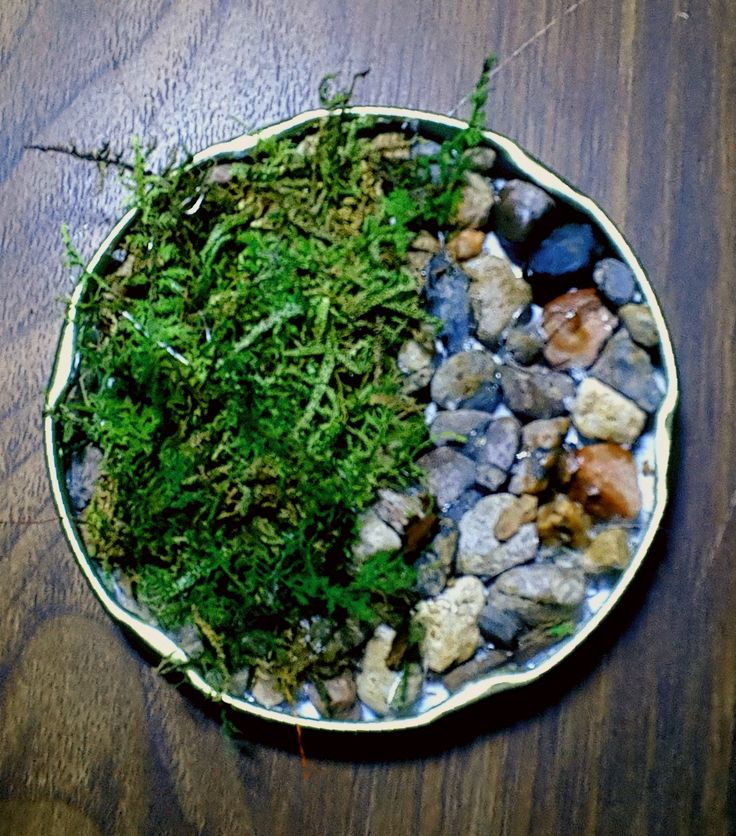 ROCK AND MOSS DRINK COASTER . Hot glue rocks and pebbles on one side of an old pasta can cap and then lay a small sheet of moss on the other side and let the sweat from your drinks water the moss.