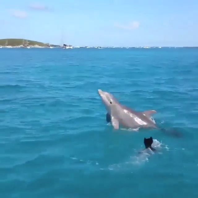 The wild dolphin is playing with a dog 🐬🐕 Incredible 😍❤️ – Laura Lume