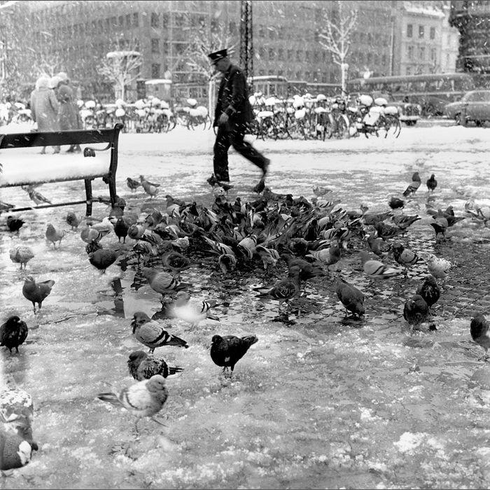 europe 59-64 / 09 pigeon copenhagen Hans Mauli