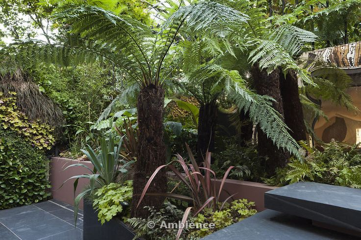 Ambience Images | Patio garden at basement level at the Morgan house  in Notting Hill, London, UK, designed by Modular Gardens in conjunction with Crawford & Gray Architects. Showing slate steps, raised bed and powder-coated steel planter, with tree ferns, ferns, melianthus, phormiums, ornamental grass, banana and olive trees, bamboo and yucca. A copper reflective material is used on the wall behind the planting to create a mysterious mirage-like feeling of increased depth. The left wall is…