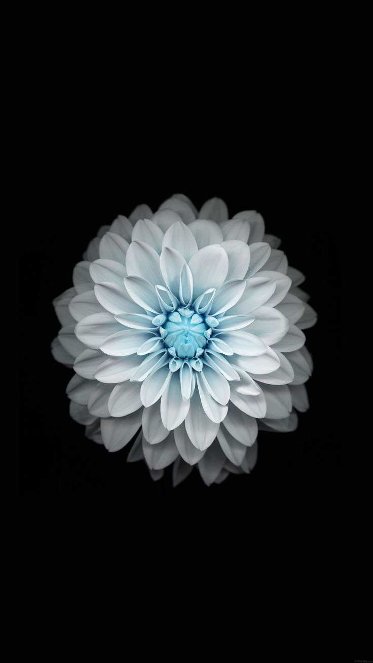 papers.co-ac92-wallpaper-apple-iphone6-plus-ios8-flower-blue-34-iphone6-plus-wallpaper.jpg 1,242×2,208 pixels