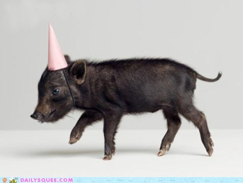 cute animals - Party Pig!Parties Animal, Happy Birthday, Little Pigs, Parties Hats, Piggies Parties, Birthday Hats, Baby Pigs, Parties Pigs, Pink Parties