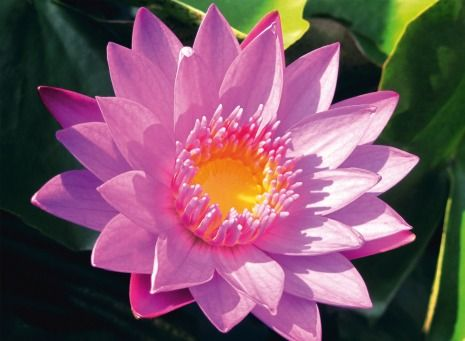 Pink Flower | @FairMail - Fair Trade Cards - FDP6355