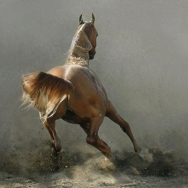 Fotos de caballos (impresionantes)                                                                                                                                                     Más