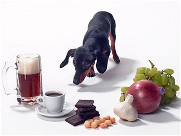 Alimentos, medicamentos e plantas tóxicas para os pets   Cachorro Verde