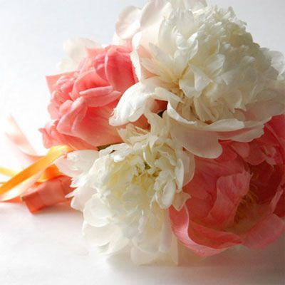 peonyWhite Flower, Bridal Bouquets, Inspiration, Wedding Ideas, White Bouquets, White Peonies, Pretty Flower, Bridesmaid Bouquets, Peonies Bouquets