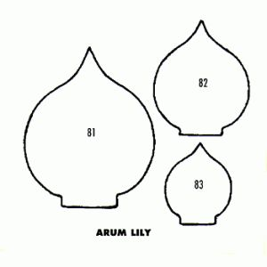 Lily-Arum