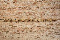 50, Caterina Morigi Saledocks, Open#5 2013, Venice