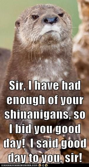 I said Good Day to you, sir!Remember This, British Accents, Funny Animal Pictures, Funny Pictures, I Said Good Day Sir, Too Funny, Make Me Laugh, Funny Stuff, So Funny