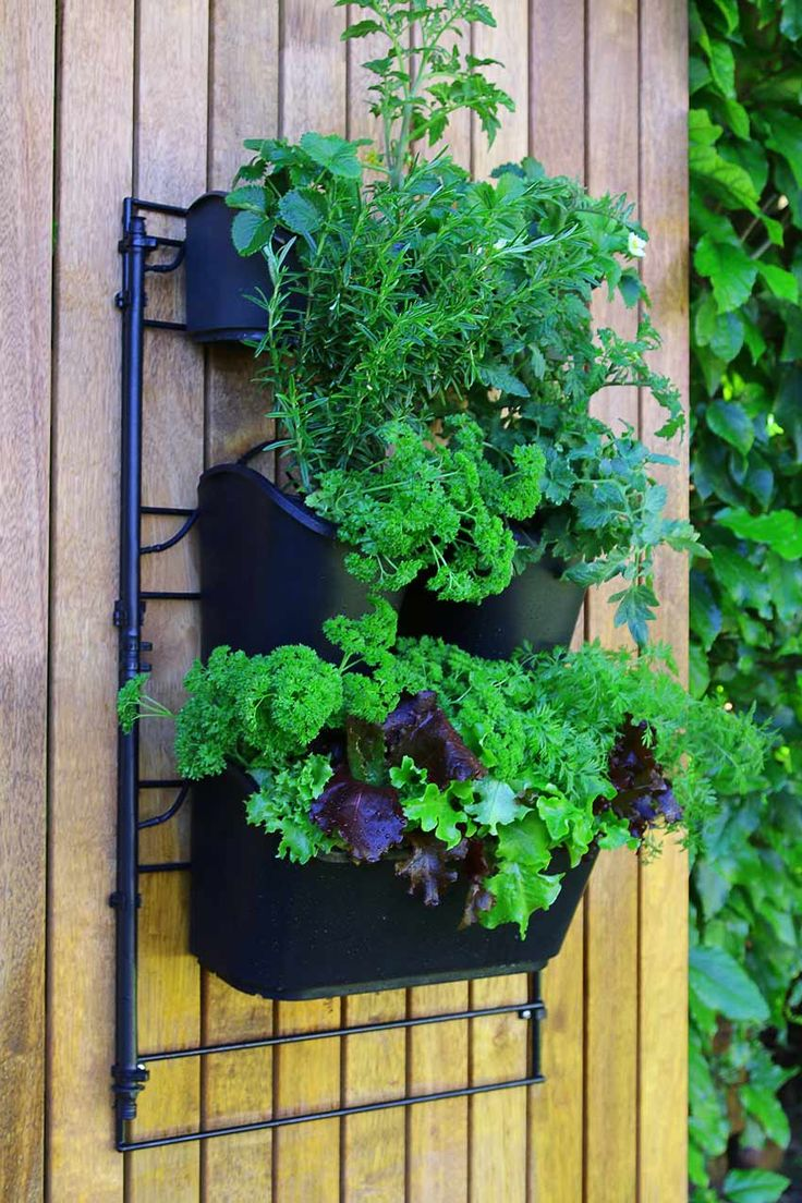 The Holman GreenWall Is An Engineered Platform That Is Designed To Make  Hanging Or Vertical Gardens