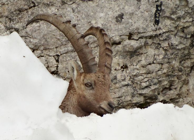 Derrière un mur de neige, Creux-du-Van, avril 2014