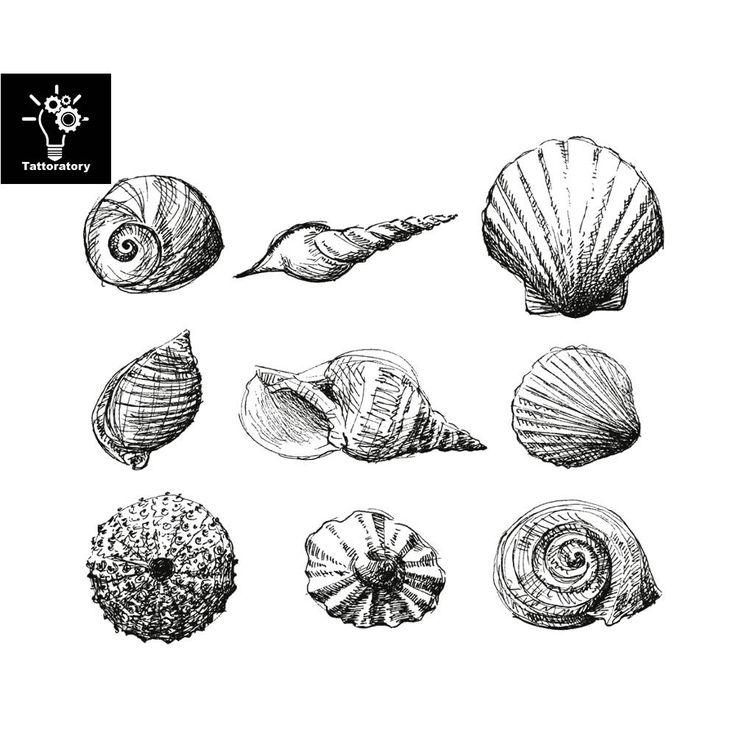 25 trending seashell tattoos ideas on pinterest ocean for Seashell tattoo meaning