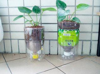寶特瓶,小植栽。