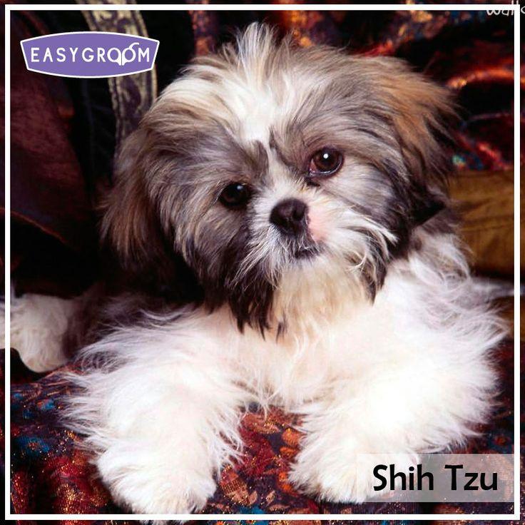 25 besten Razas de perros pequeñas Bilder auf Pinterest   Kleine ...