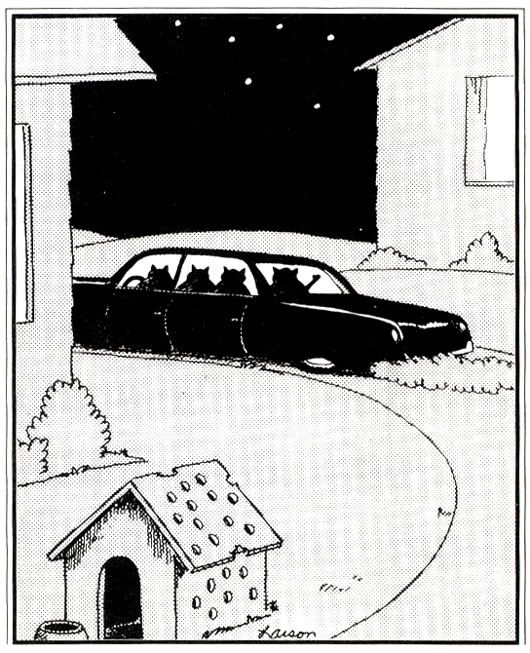Pin On Farside Amp Have A Laugh
