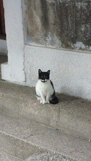 Kokkari Cat