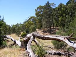 Australia's second oldest national park. Go bushwalking, cycling, have a bbq or picnic, play tennis  Read More...Location: Upper Sturt Road, Belair. Phone No: 8278 5477.