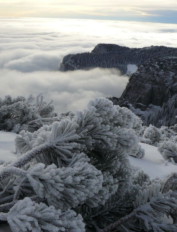 Cold winter morning on Ceahlău Mountains, Romania