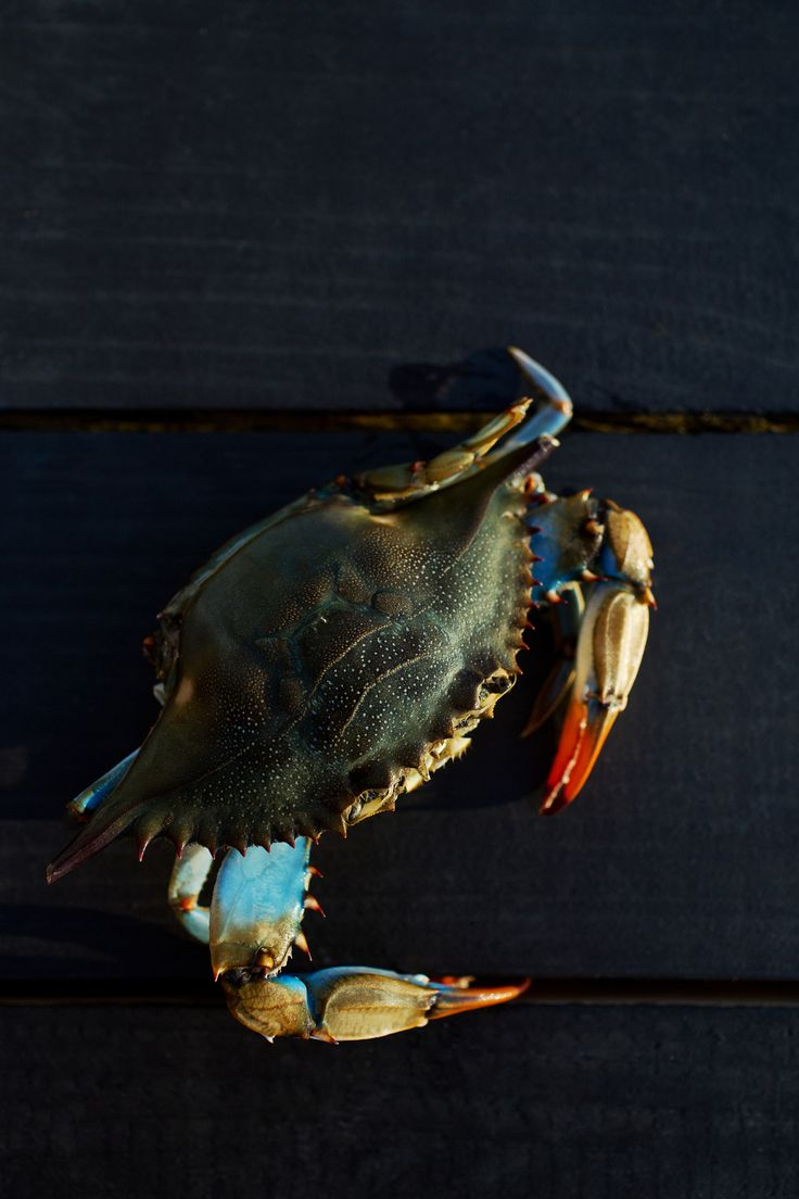 2115 best images about fishing on pinterest world for Blue crab fishing