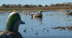 Make your duck decoys look more alive with this simple rigging tip. http://www.wideopenspaces.com/a-simple-decoy-rigging-tip-that-will-make-all-the-difference-this-fall-for-duck-hunting/