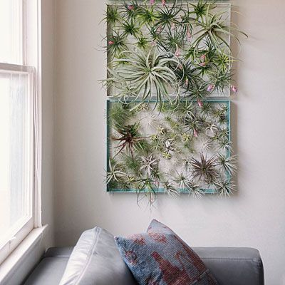 Create your own dynamic artwork with Tillandsia arranged in wire frames. #airplants