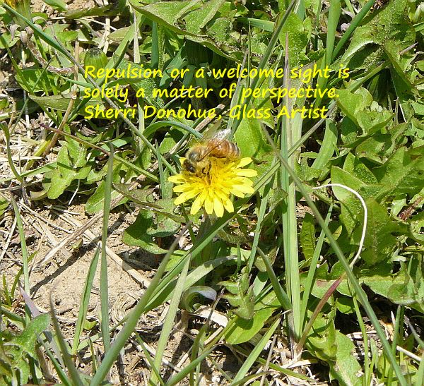 My lawn is full of dandelions for both the bees and me. Dandelion wine anyone?