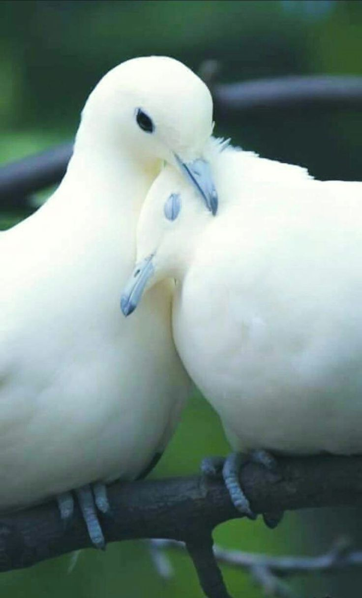 ~~ Love comes in all shapes, sizes & species...Its what makes the world go round ~~