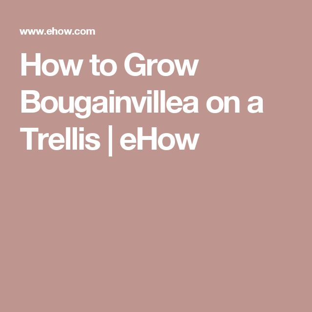 How to Grow Bougainvillea on a Trellis | eHow