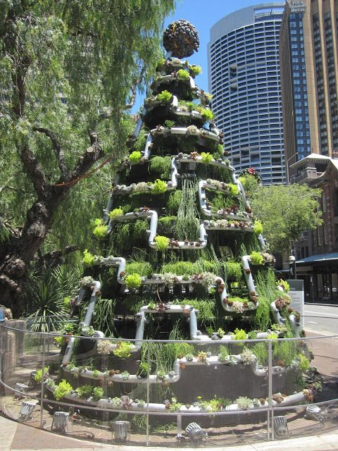 Living Christmas tree - The Rocks #Sydney #Australia