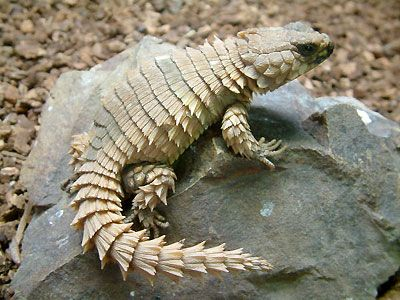 1094 best images about 00 ANFIBIOS Y REPTILES on Pinterest ...