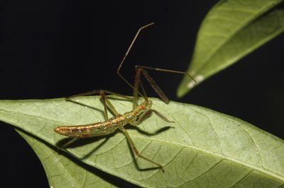 25 best ideas about bug identification on pinterest - Identifying insect eggs in the garden ...