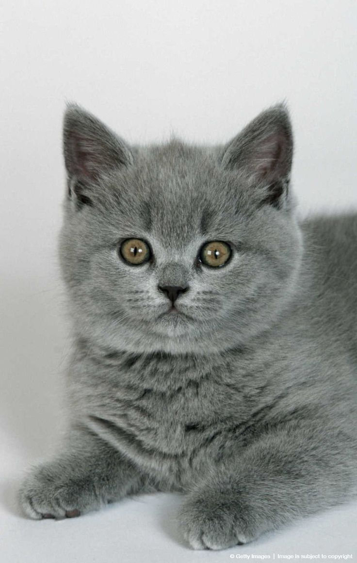 """Kittens are wide-eyed, soft and sweet, with needles in their jaws and feet."" --Pam Brown"