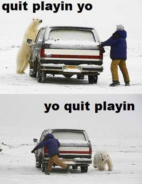 hahahaha.  seriously, yoGames, Animal Pictures, Memes, Polar Bears, Quit Playin, Funny Stuff, Funny Animal, Canadian Humour, So Funny