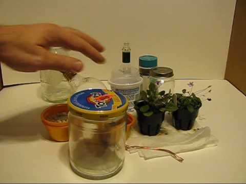 A Micro terrarium is a very small terrarium often with only 1 very small plant. In this project I use a micro miniature sinningia which is among the smallest...