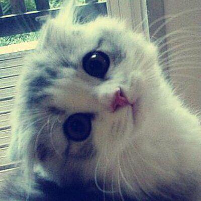 Qué tierno se ve ese gatito mirándonos con esa carita tan angelical ☺️
