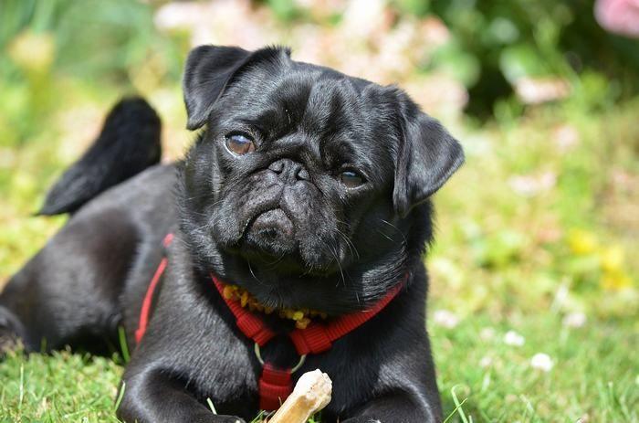 21 Surprising Dog Facts (Especially #3)