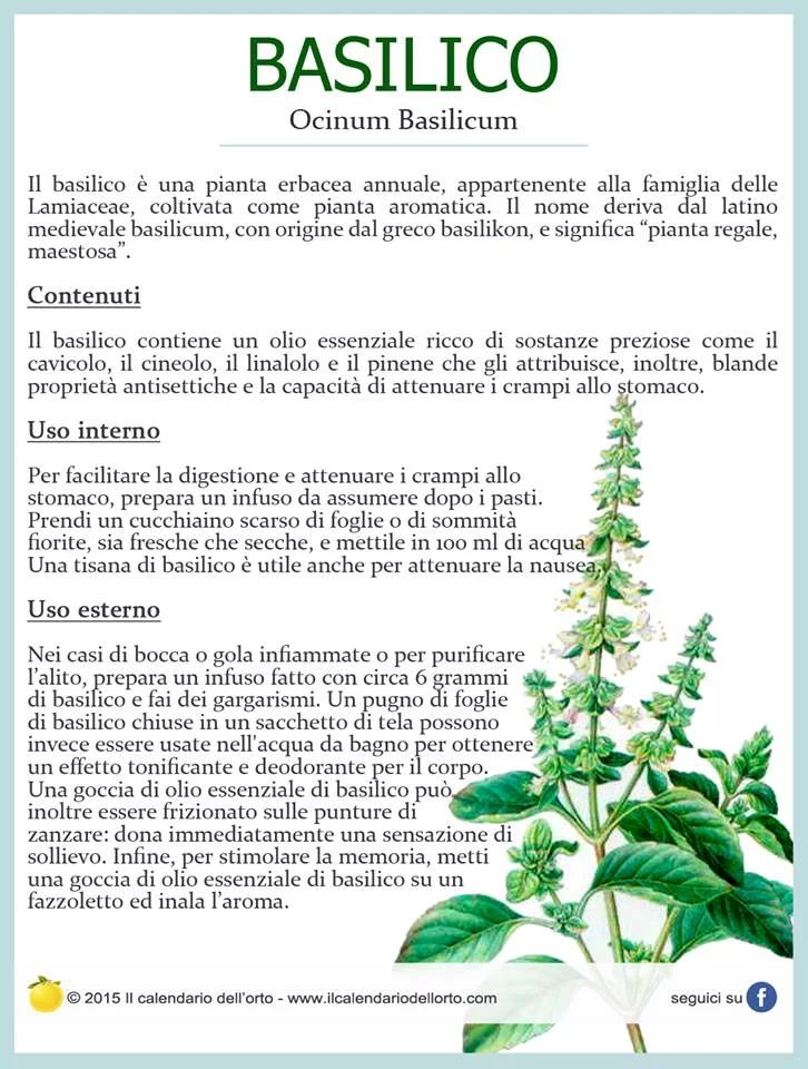 Il Calendario dell'Orto   Piante aromatiche