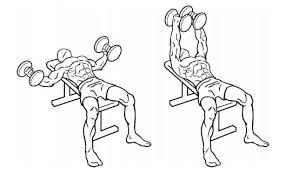 dumbell flys - Google Search