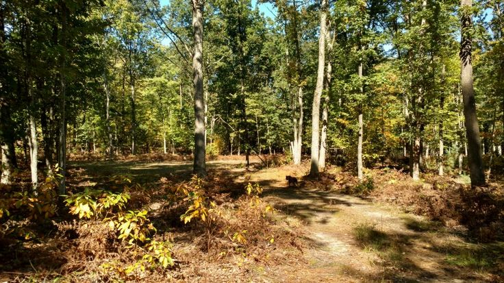 Beautifully situated piece of hunting land! 20 acres bordered on 2 sides with the Manistee National Forest. Nice mix of hardwoods and pines. Wildlife excels! Check out the trail cam and see bucks, does, turkey and bear! Rubs throughout property. Paved and county maintained road, electric (power pole on property), food plots, and some trails established. Survey available with boundaries marked clearly on property. This one is ready to go!!