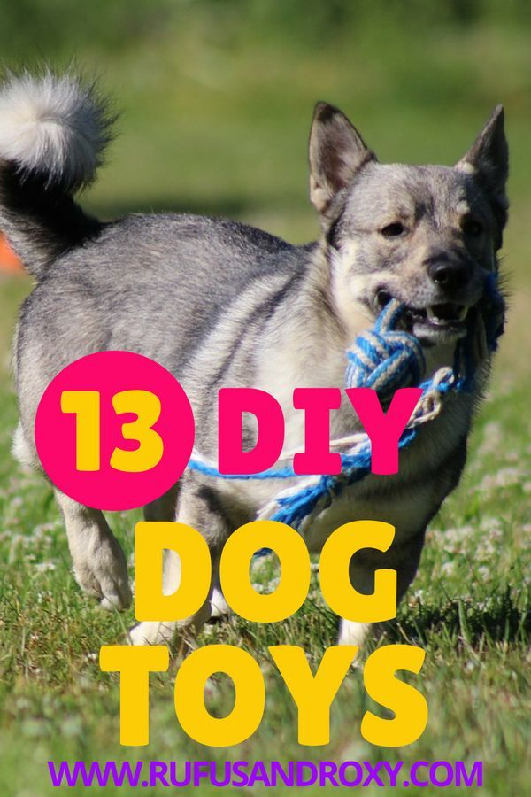 13 Easy Diy Dog Toys From Free Or Cheap Things Diy Dog Toys