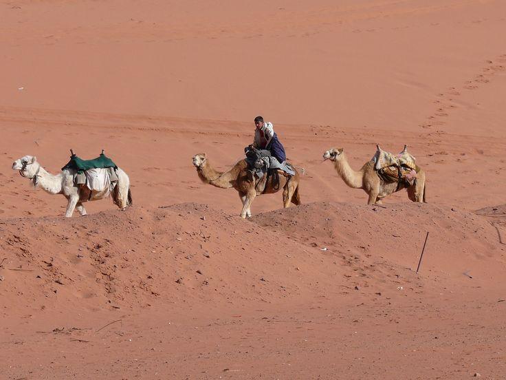 Camellero en el desierto de Wadi Rum.