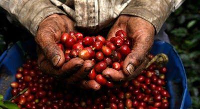 Café colombiano aumento la producción en 2017 http://www.hoyesnoticiaenlaguajira.com/2018/01/cafe-colombiano-aumento-la-produccion.html