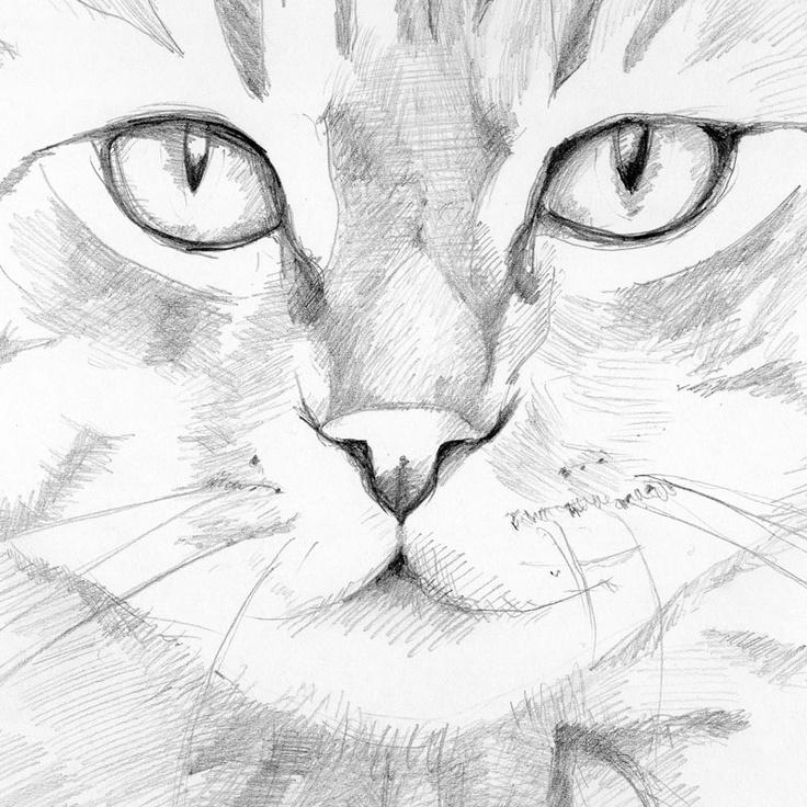 black and white cat - 2013