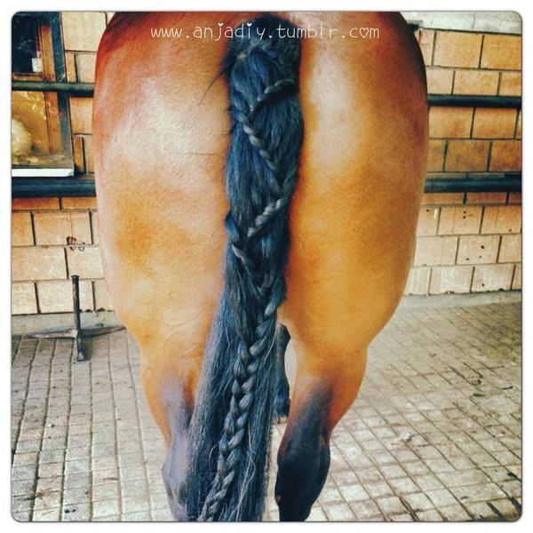 Just a quick horse tail braid