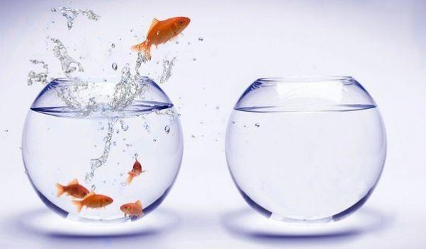 Порядок в голове - перспективное будущее