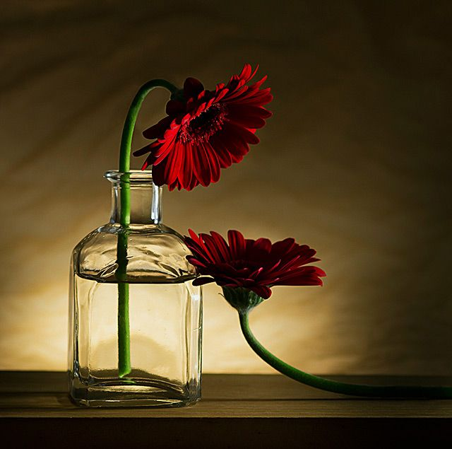 Still-life photography as a form of art takes a great deal of learning & experience. You need to master the art of selecting objects and other variants.