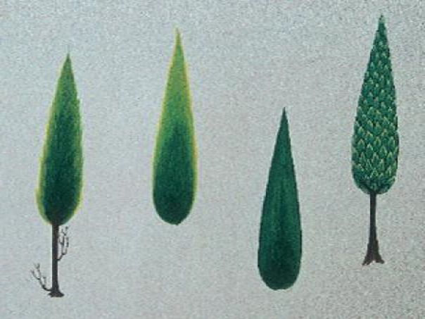 Cahide Keskiner - Minyatür Sanatında Doğa Çizim ve Boyama Teknikleri Tarama ve tonlama tekniğiyle yapılan servi çeşitleri