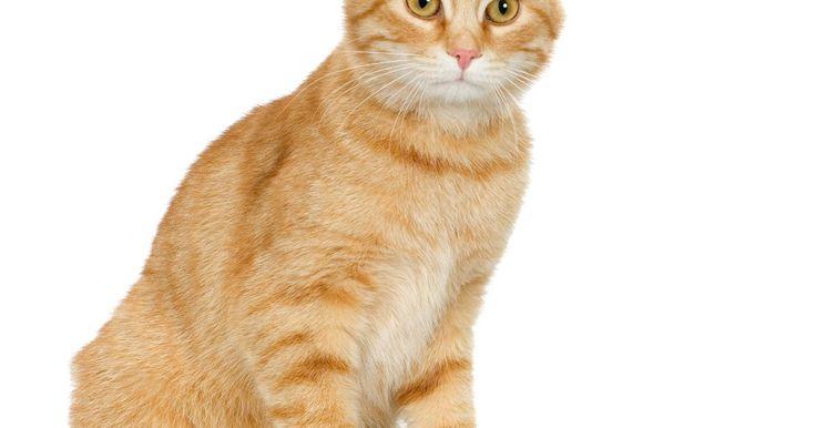 El mejor alimento para los cristales en la orina de los gatos. Los cristales en la vejiga y la orina de un gato no sólo son incómodos, sino que pueden ser peligrosos e incluso mortales en los gatos machos. A menudo, todo lo que necesitas para evitar la formación de cristales o la recurrencia de ellos es hacer algunos cambios simples en la dieta del animal.