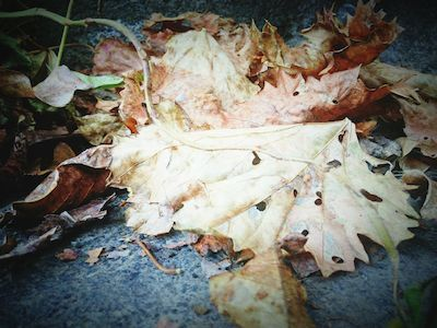 Autumn Colors Autumn Collection Autumn Melancholy Dead Leaves Autumnishere